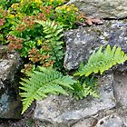 Fern and Rockery by Sue Robinson