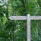 Sussex Border Path sign by Sue Robinson