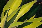 Plant In Bright Sunlight by Larry Costales
