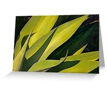 Plant In Bright Sunlight Greeting Card
