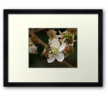 Honey Bee on White Flower Framed Print