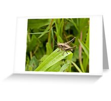 Dark Bush-cricket Greeting Card