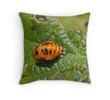 Harlequin Ladybird Pupa Throw Pillow