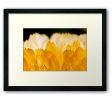 Flower petal closeup Framed Print
