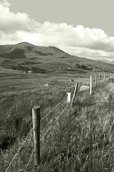 lush fields of ireland by morrbyte