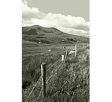 lush fields of ireland Photographic Print