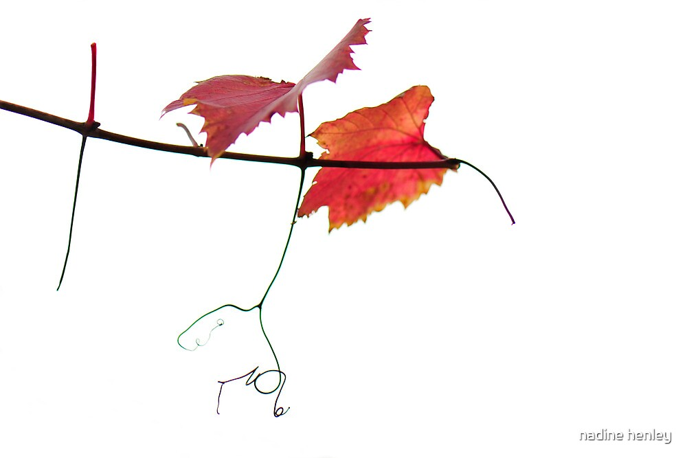 vine calligraphy by nadine henley