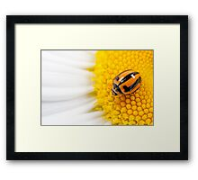 Dares to be different Framed Print