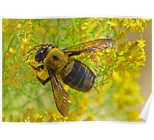 Bee On Yellow Wild Flowers Poster