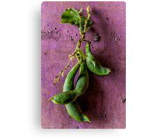 Fava Beans (no Chianti) Canvas Print