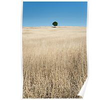 """Tree of Life"" ∞ Killarney, QLD - Australia Poster"