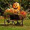 Pumpkins in On Display