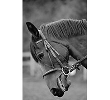 Does all the work   'Hawthorne' Photographic Print