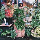 December in Portland by Eliza Sarobhasa
