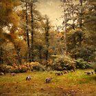 Autumn Grazing by Jessica Jenney