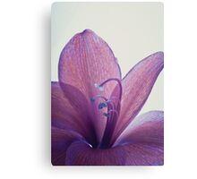 Purple Flower - Macro Canvas Print
