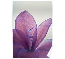 Purple Flower - Macro Poster
