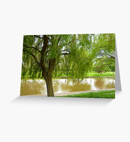 Willow tree Greeting Card