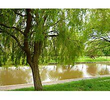 Willow tree Photographic Print