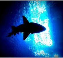 SHARK SILHOUETTE by katemmo