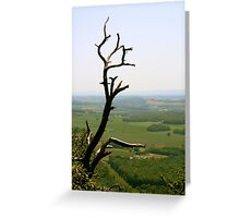 Treetop Greeting Card