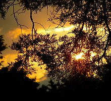 Sunset Through the Trees by K. Abraham
