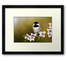 Apple Blossom Chickadee Framed Print