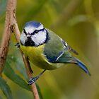 blue tit by brett watson