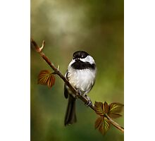 Autumn Chickadee Painting Photographic Print