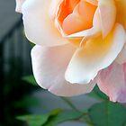 White Flower by K. Abraham