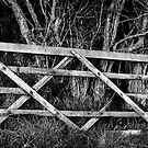 Forgotten Gate by Stephen J  Dowdell