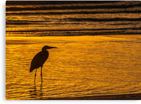 ****** HERON SILHOUETTE ****** by RGHunt