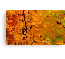Capture ALL The Colors Canvas Print