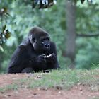 Gossip Gorilla by quirinusriddle
