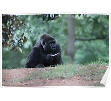 Gossip Gorilla Poster
