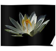 Black With A Hint Of Botanical Element ~ Part Thirteen Poster