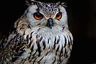 Majestic Owl by Sally Green