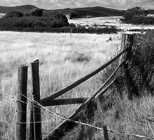 Farmland Flinders Island by Andrew  Makowiecki