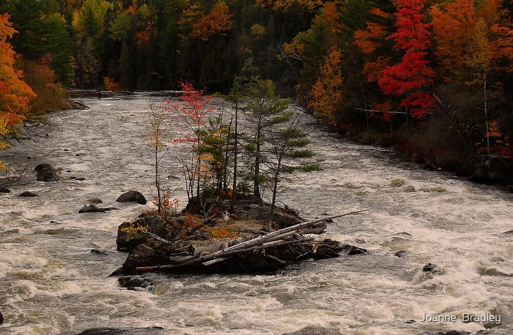 Autumn Island by Joanne  Bradley