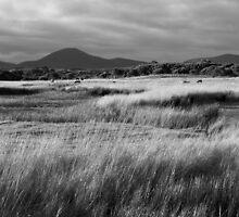 Farmland Flinders Island 2 by Andrew  Makowiecki