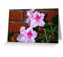 Azalea Blooming By The Brick Wall Greeting Card
