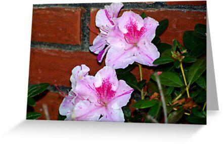 Azalea Blooming By The Brick Wall by BamaBruce69