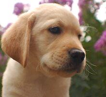 Am I cute or not? by DennisThornton