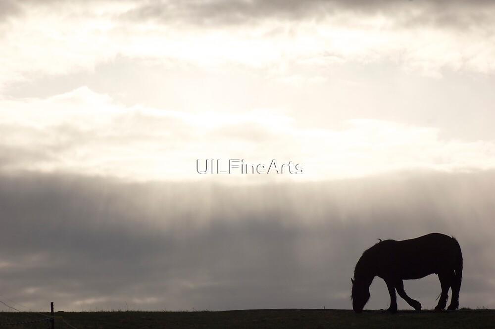 Dusk & Dew by UILFineArts