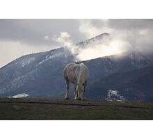 Willow & Mountains Photographic Print