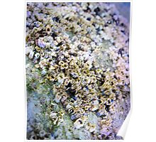 Oh Barnacles! Poster