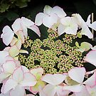 HDR for hydrangea by bubblehex08