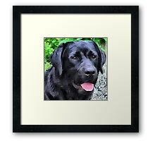 Black Lab - Rizzo Framed Print