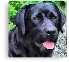 Black Lab - Rizzo Canvas Print
