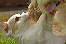 Playfull crazy puppy by Jemma Richards